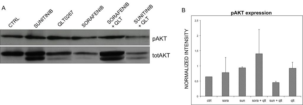4.3.2 The combination of anti-angiogenic drugs and QLT0267 decreases the activity of of ILK-1 in vivo Since we also found that the QLT0267 is an inhibitor of the activity of ILK-1 but didn t inhibit