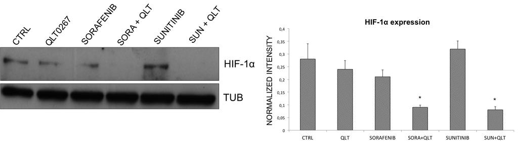 Fig 8 Level of HIF-1α expression. The immunoblot swoes the expression level of HIF-1α after treatment of human glioma U87 cells with anti-angiogenic drugs and QLT0267.