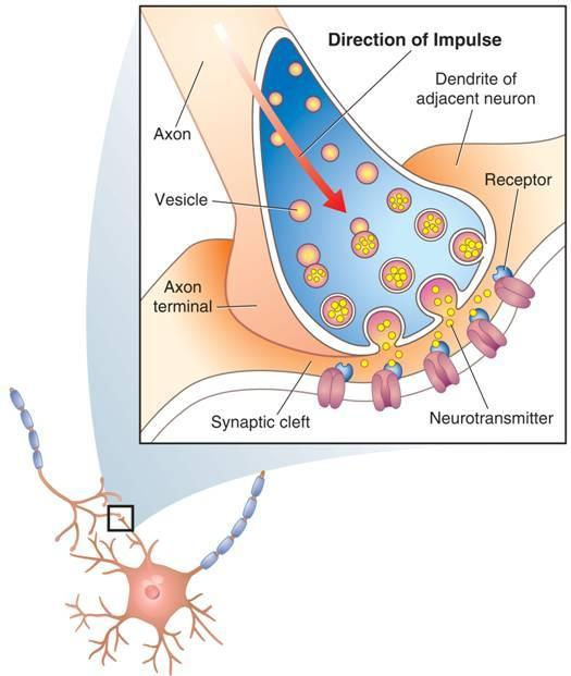 The Synapse A