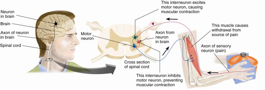 neuron to prevent the dish from