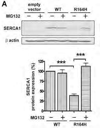 defective proteins substrates of the