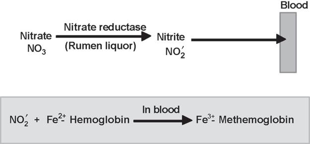 34 Plant Secondary Metabolites Fig. 1. Mechanism of action of nitrate. 1.2. Present in Spinach, raps, sorghum, grasses. 1.3. Principle of Assay The sample is extracted with distilled water and the aqueous extract is clarified with zinc hydroxide.
