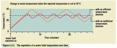 Homeostasis continued If the temp is LESS than the set temp, the thermostat switches ON the water heater.