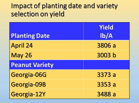 Figure 5. Yield as influenced by planting date and variety. Means followed by the same letter are not significantly different according to Fisher s LSD (P 0.05).