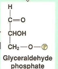 Glycolysis: Step by Step Step 6:
