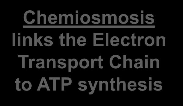 ATP synthase enzyme to build ATP Chemiosmosis links the