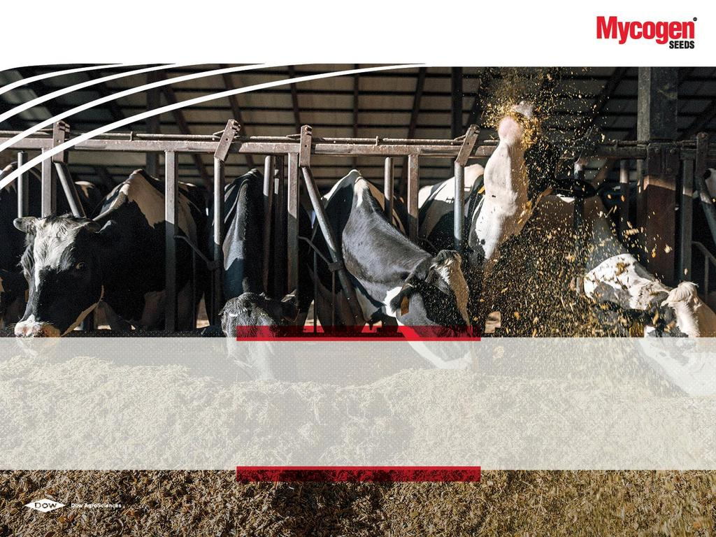 WELCOME MYCOGEN SEEDS