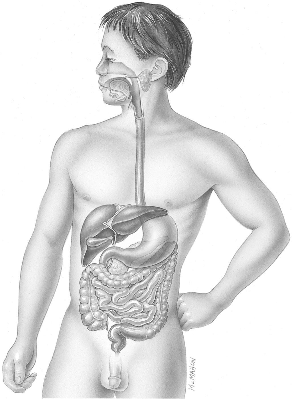 D. Labeling Exercise 92. Label the parts of the digestive system as indicated in Figure 16-1.