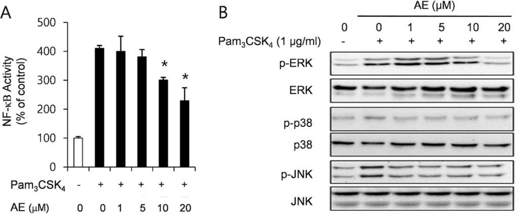 244 / Anti-inflammatory effect of aloe-emodin Fig. 4. Effect of AE on the NF-κB activation (A) and MAPK expression (B) in RAW 264.
