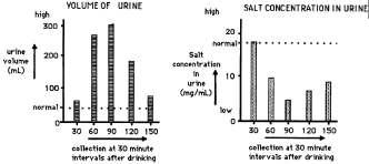 Distal tubule 10 34. Using human subjects, an investigation was carried out to look at the effect of drinking distilled water on the production and composition of the urine.