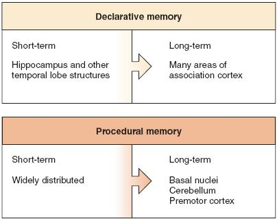 Memory Memory encoding The physiological events that lead to memory formation Declarative memory Retention and recall of conscious
