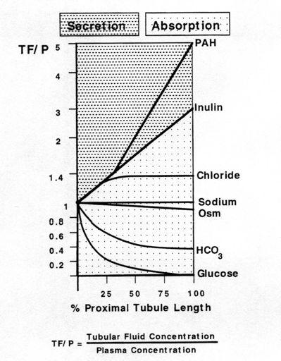 Proximal Tubule 67% of filtered load Sodium and water are absorbed iso-osmotically Water flow