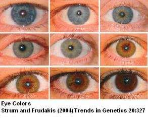 Eye Color Polygenic & Multiple
