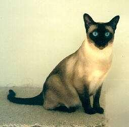 expression In Siamese cats and arctic foxes, temperature has an effect on coat color Leaves