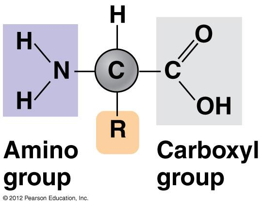 Monomers of Proteins: Amino Acids