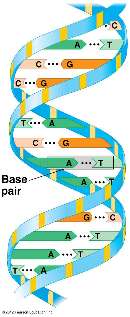 Differences between DNA and