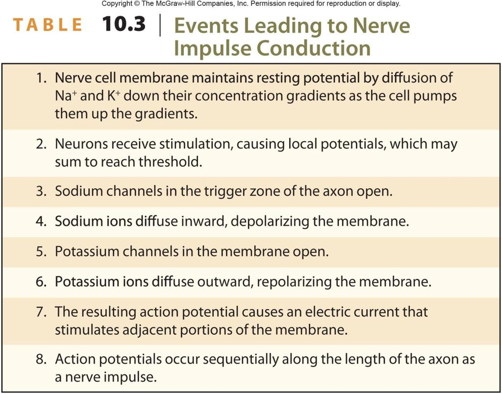 10.1: Introduction. Cell types in neural tissue: Neurons Neuroglial ...