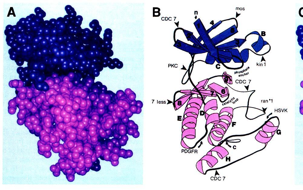 Tyr and Ser/Thr kinases have similar