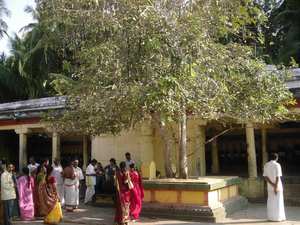 266 Ethnobotany Research & Applications Figure 2. Devotees worshipping Cassia fistula L. at Thiruadigai Siva temple, in Tamil Nadu, India.