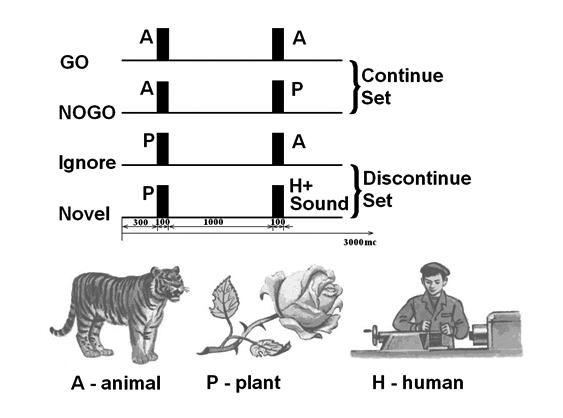 Abbreviations: A, P, H stimuli are Animals, Plants and Humans respectively. GO trials are when A-A stimuli require the subject to press a button.