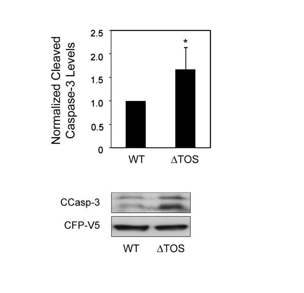 Figure 5 Figure 5: Cleaved caspase-3 levels in HEK 293T cells expressing PKCδ ΔTOS mutant HEK 293T cells expressing wild-type PKCδ (WT) or a mutant of PKCδ (ΔTOS) were incubated with vehicle (10%