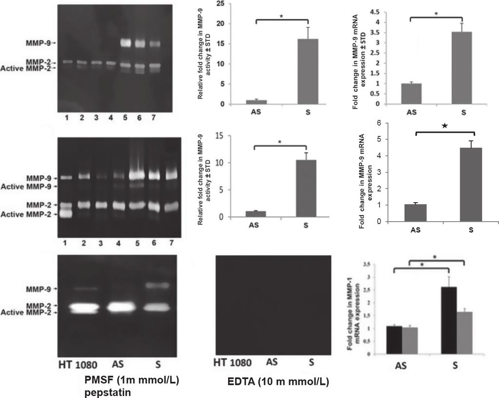 EGF Modulation of Interstitial Collagens V. H. Rao et al. cells were allowed to recover for 24 h in the medium supplemented with 20% bovine serum albumin.