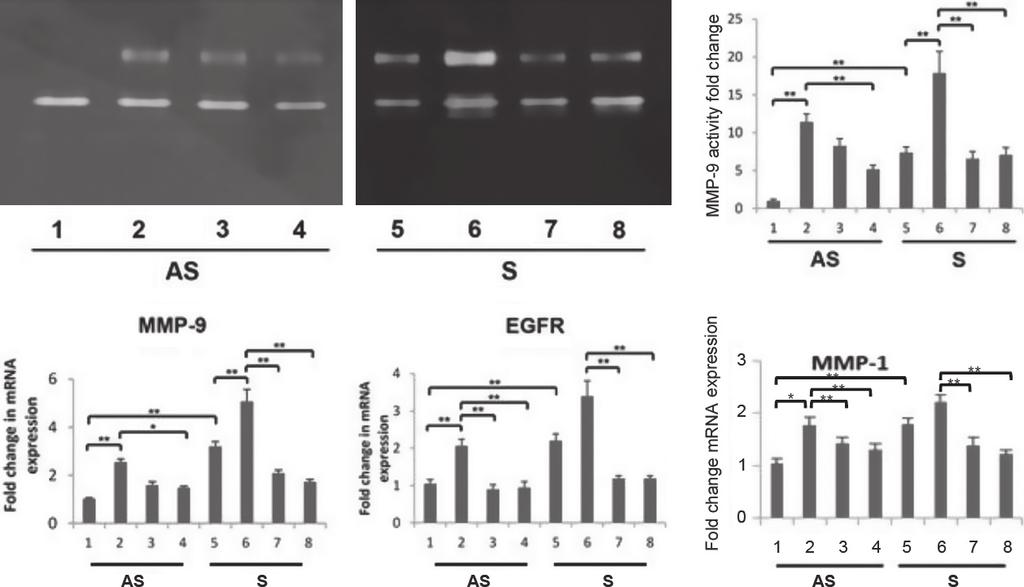 EGF Modulation of Interstitial Collagens V. H. Rao et al. A B C D E Figure 3. EGFR inhibitor, AG1478 modulate MMP-9 activity and mrna expression of MMP-9, EGFR, and MMP-1 in EGF-treated VSMCs.