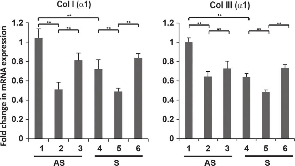 V. H. Rao et al. EGF Modulation of Interstitial Collagens A B A B Figure 4. EGFR inhibitor AG1478 modulates the mrna expression of Col I (a1) and Col III (a1) in EGF-treated VSMCs.