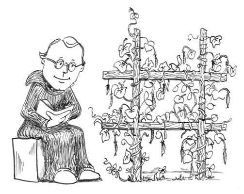 Mendel s Pea Plants For his experiments, Mendel used ordinary pea plants.