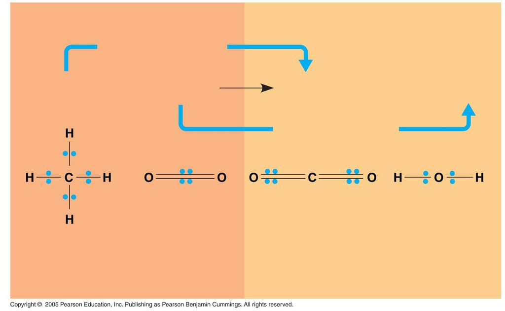 LE 9-3 Products Reactants becomes oxidized CH4 2 O2 + CO2 C Energy 2 H2O + becomes reduced H