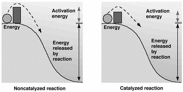 Oxidation-Reduction Reactions Reducing agent: molecule that donates an electron Oxidizing agent: molecule that accepts an electron Oxidation-Reduction Reactions In cells often involve the transfer of