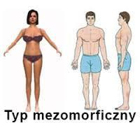 wedge shape of the body, cubic shape of the head, broad shoulders, muscled arms and legs, narrow hips, a small amount of body fat.