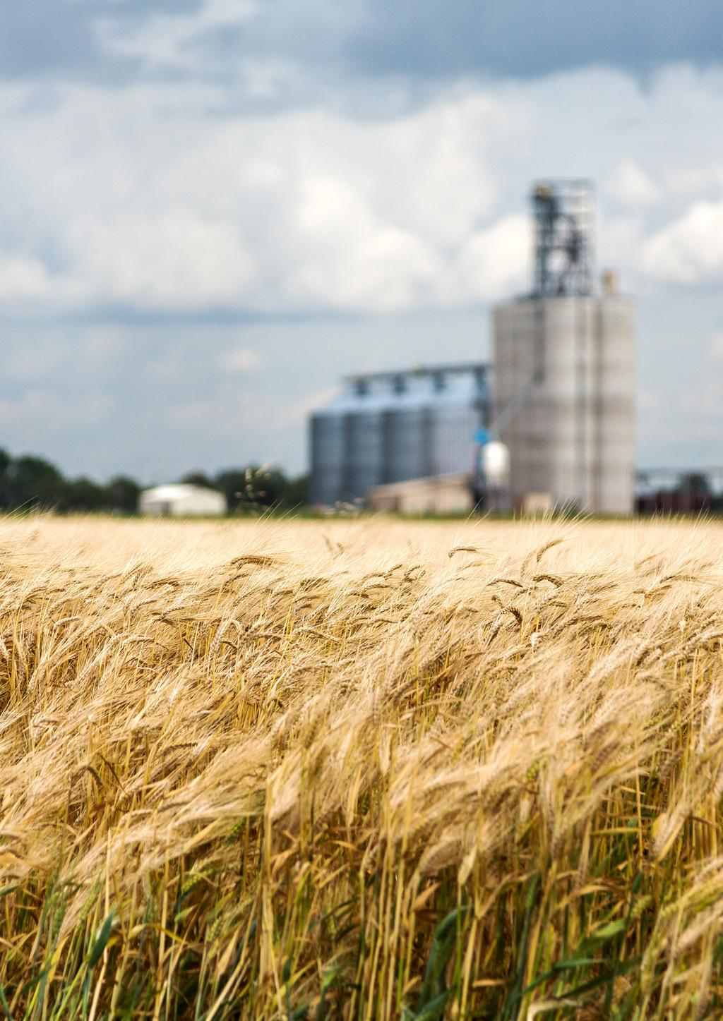 It is hoped the findings of this report will help establish grain fibre as a key