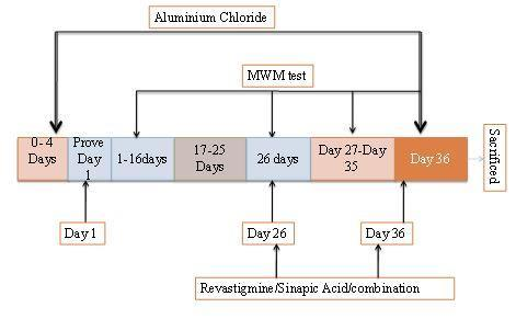 Figure 4: Structure of PCA. Figure 5: Experimental protocol for aluminum chloride induced dementia. Table 1: Summary of invitro AchEI by HCE derivatives.