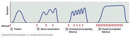 ) By changing the frequency of stimulation Temporal summation unfused (incomplete) tetanus fused (complete) tetanus 2.