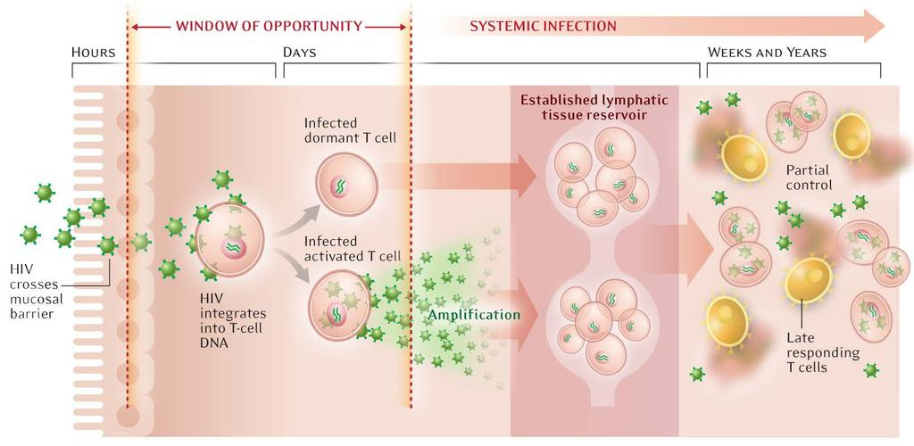 Window of Opportunity to Prevent Infection