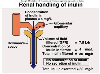 Renal Physiology: Renal Exchange Mechanisms Excrete excess solutes And/or Concentrating the Urine Create a very high osmotic pressure in the