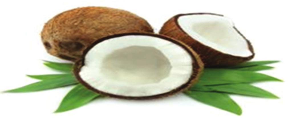 Common name, biological source, and family Coconut oil C.