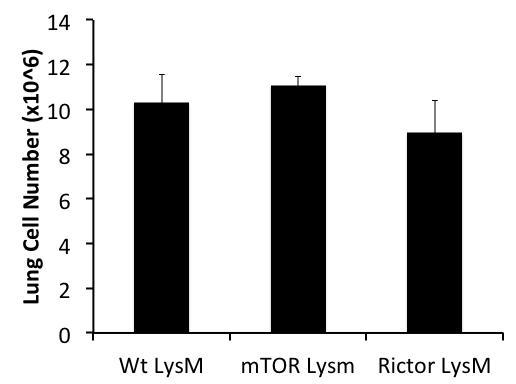 a. b. c. Supplementary Figure 1. mtor LysM and Rictor LysM mice have normal cellularity and percentages of hematopoe>c cells. a. Cell numbers of lung, liver, and spleen. b. Cell numbers of bone marrow and bone marrow derived macrophages.