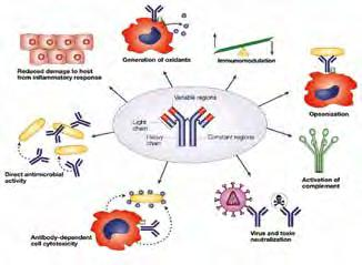 Immune system activity CK are low molecular weight proteins that play a key role in the induction and regulation of the immune response.