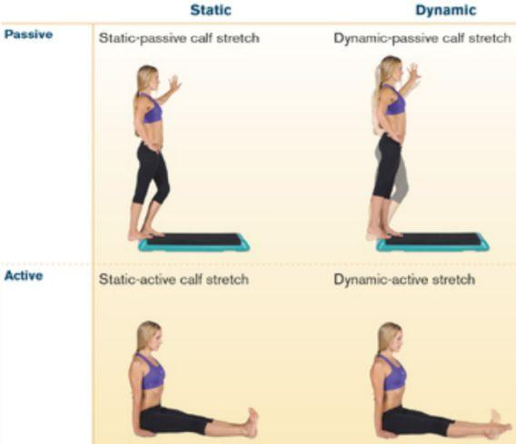 Flexibility Four types of stretching programs: Static stretching: stretching until you feel tightness and holding stretch for 30-60 seconds Passive stretching: partner applies pressure, producing a