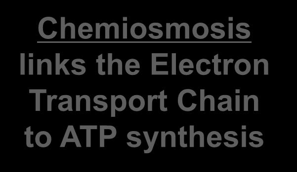 Transport Chain to ATP synthesis http://www.