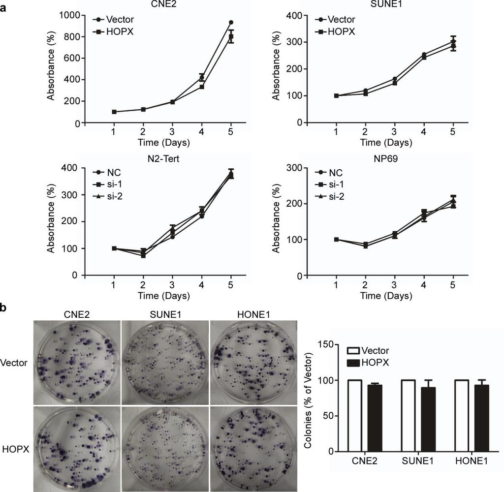 Supplementary Figure 5. HOPX exhibits little effect on NPC cell proliferation in vitro.