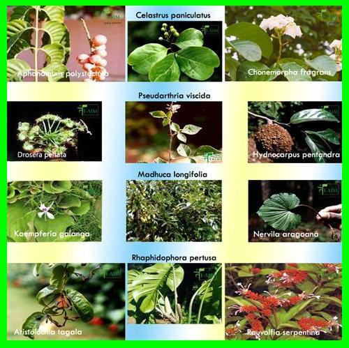 Medicinal Plants for Primary Care 65 to 80% world population use safety traditional