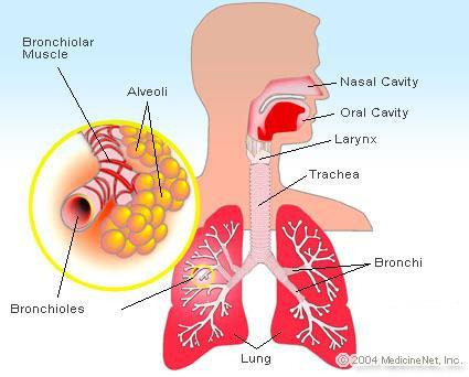 Chronic obstructive lung