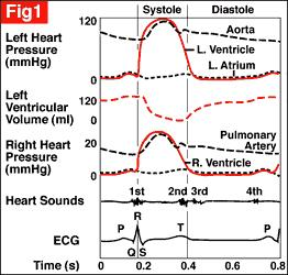 The relationship between electrical and mechanical events in the cardiac cycle is summarised in Figure 1.