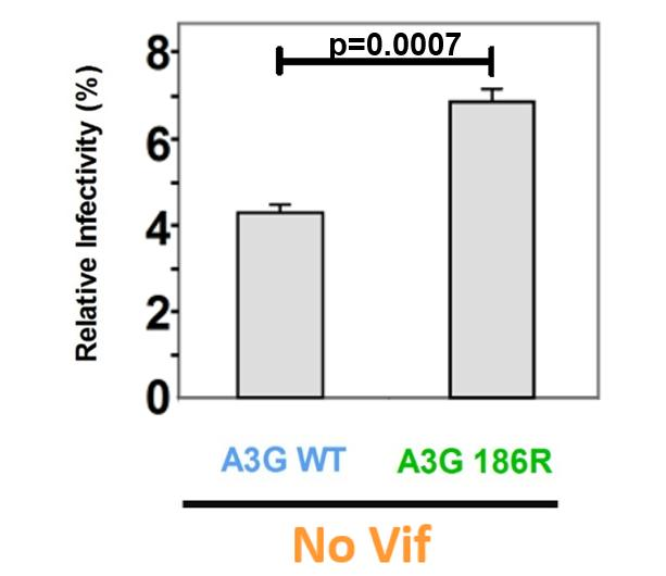Relative Infectivity (%) Vif activity is independent of patient A3G genotype and A3G WT restricts HIV more