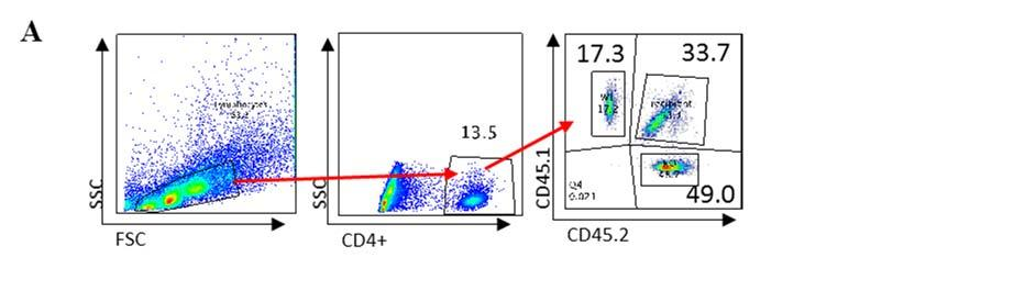 Supplementary Figure 4: PD-1H determines the pool size of Treg cells in bone marrow chimeric mice. (A) A total of 10 million mixed bone marrow cells from CD45.1 WT mice and CD45.