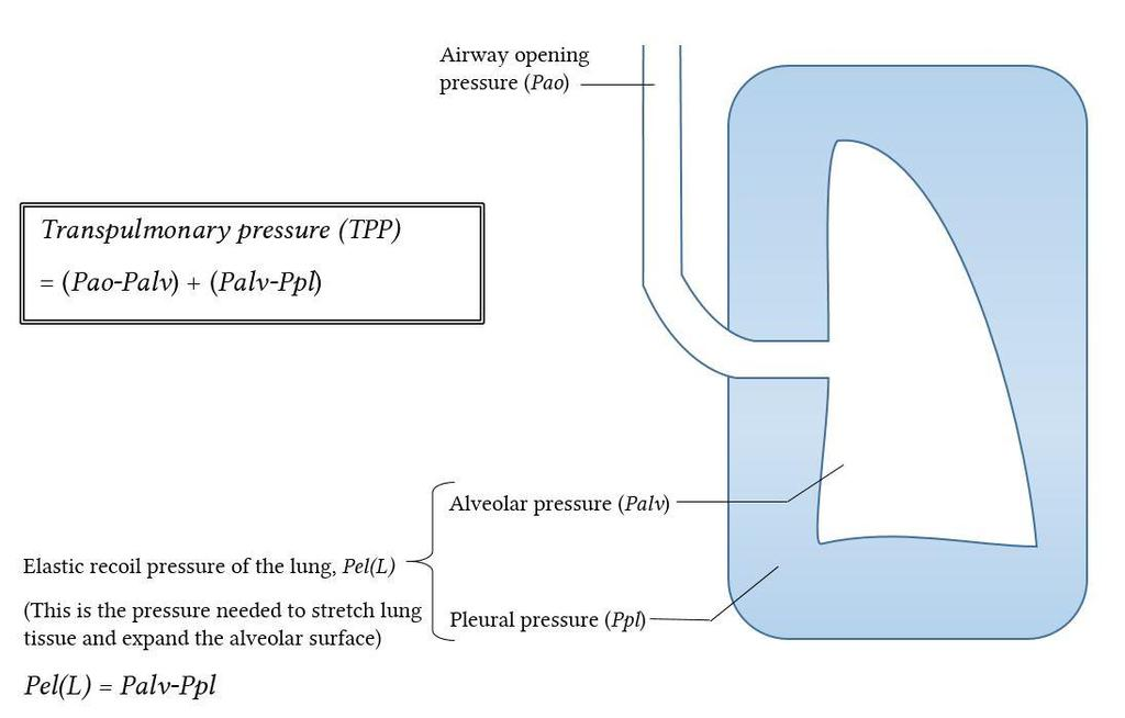 3-Transpulmonary pressure (TPp) (Extending Pressure) The difference between the alveolar pressure (Palv) and the pleural pressure(ppl).