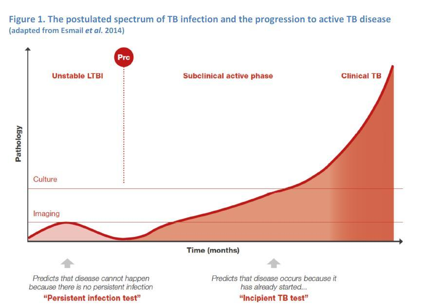 LTBI test concept: persistent infection and incipient TB Persistent